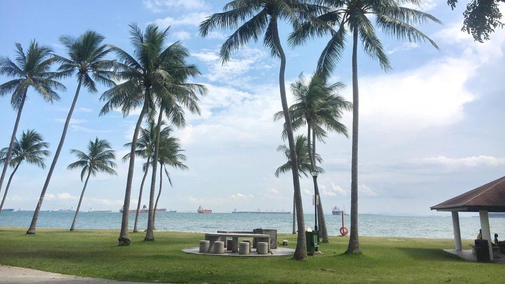 シンガポールのビーチでヤシの木と海が映っている画像