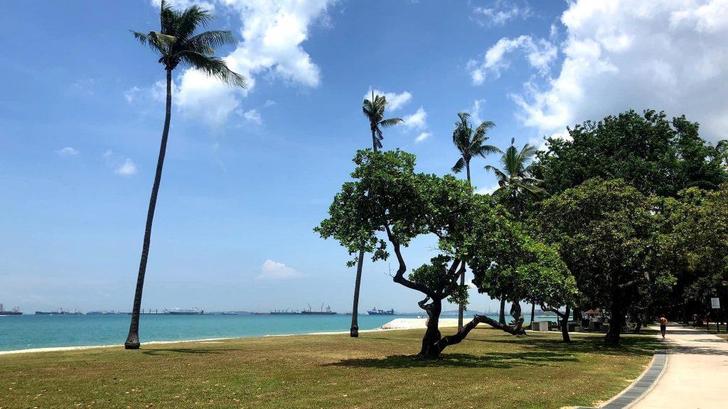 シンガポールの海岸で、遊歩道とヤシの木が映っている画像。