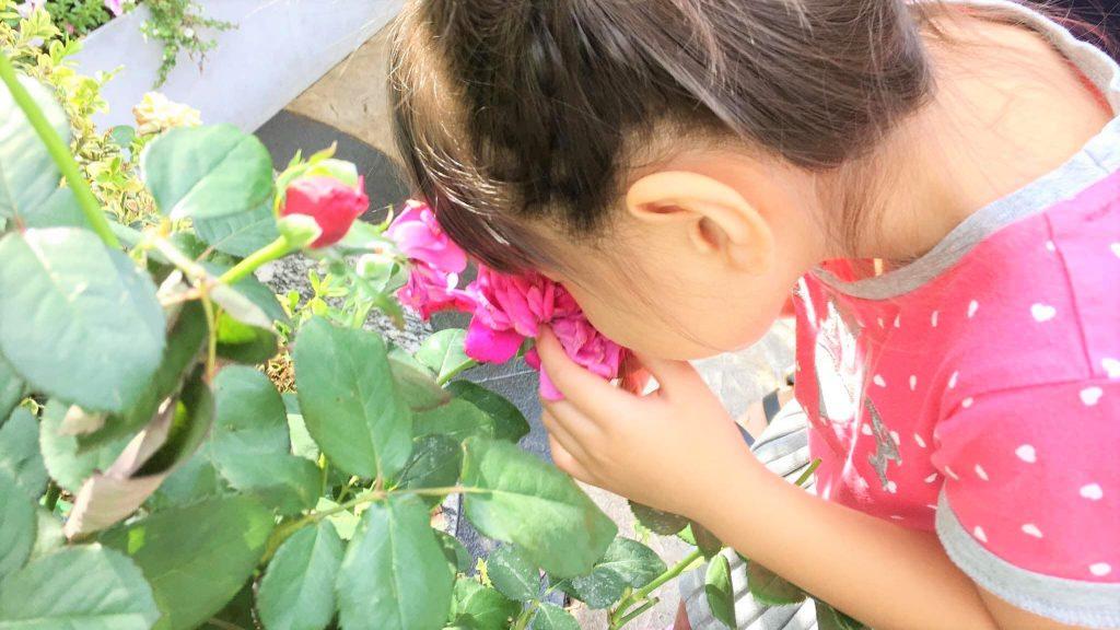 花にに顔を近づけて匂いを嗅ぐ娘さんの画像。