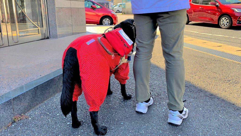 治療院の駐車場に立つ清水さんと盲導犬の足元を後ろから撮影した画像。