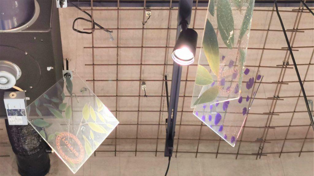 天井に設置されたライトと植物がデザインされたアクリル板を撮影した画像。