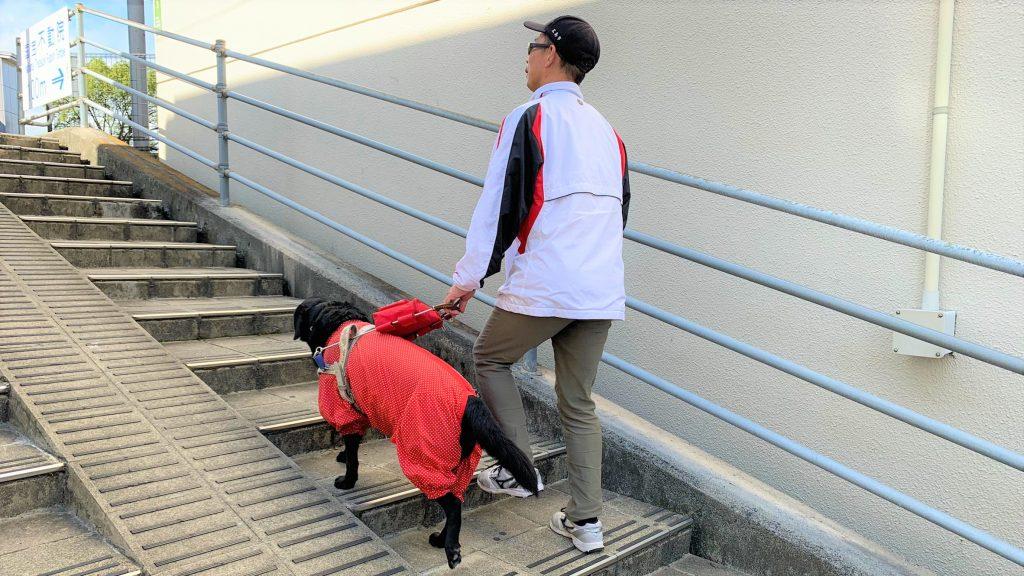 清水さんが盲導犬と一緒に階段を登っている画像。